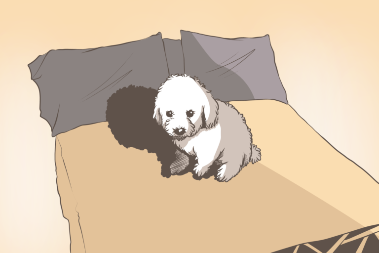 Hond op je bed, ja of nee