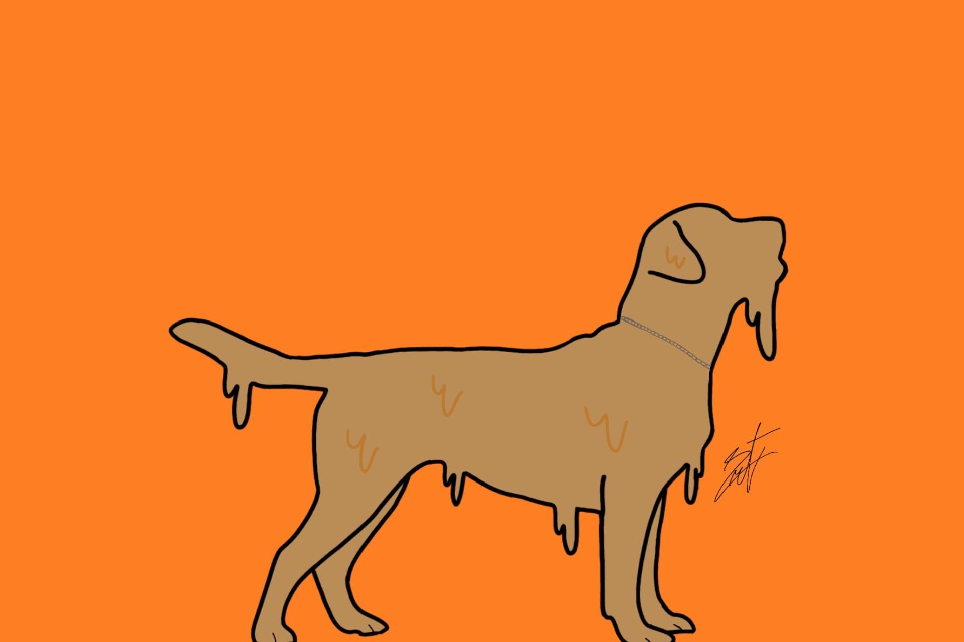 Een dikke hondenvacht beschermt tegen de warmte