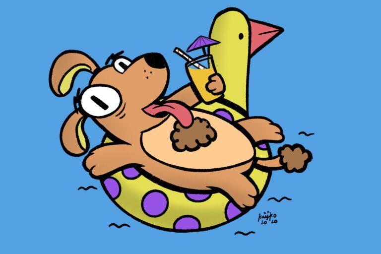 Beste zwembed voor grote honden