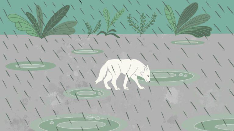 waarom drinken honden regenwater