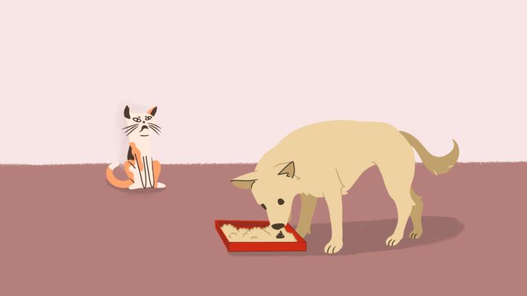 Waarom eten honden uit de kattenbak