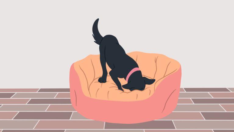 Waarom graven honden in hun mand