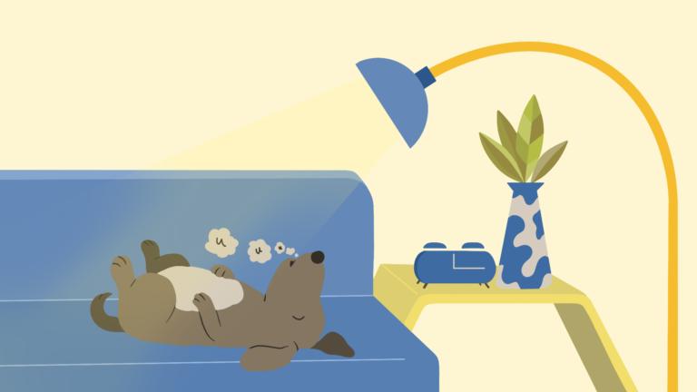 Waarom huilen honden in hun slaap