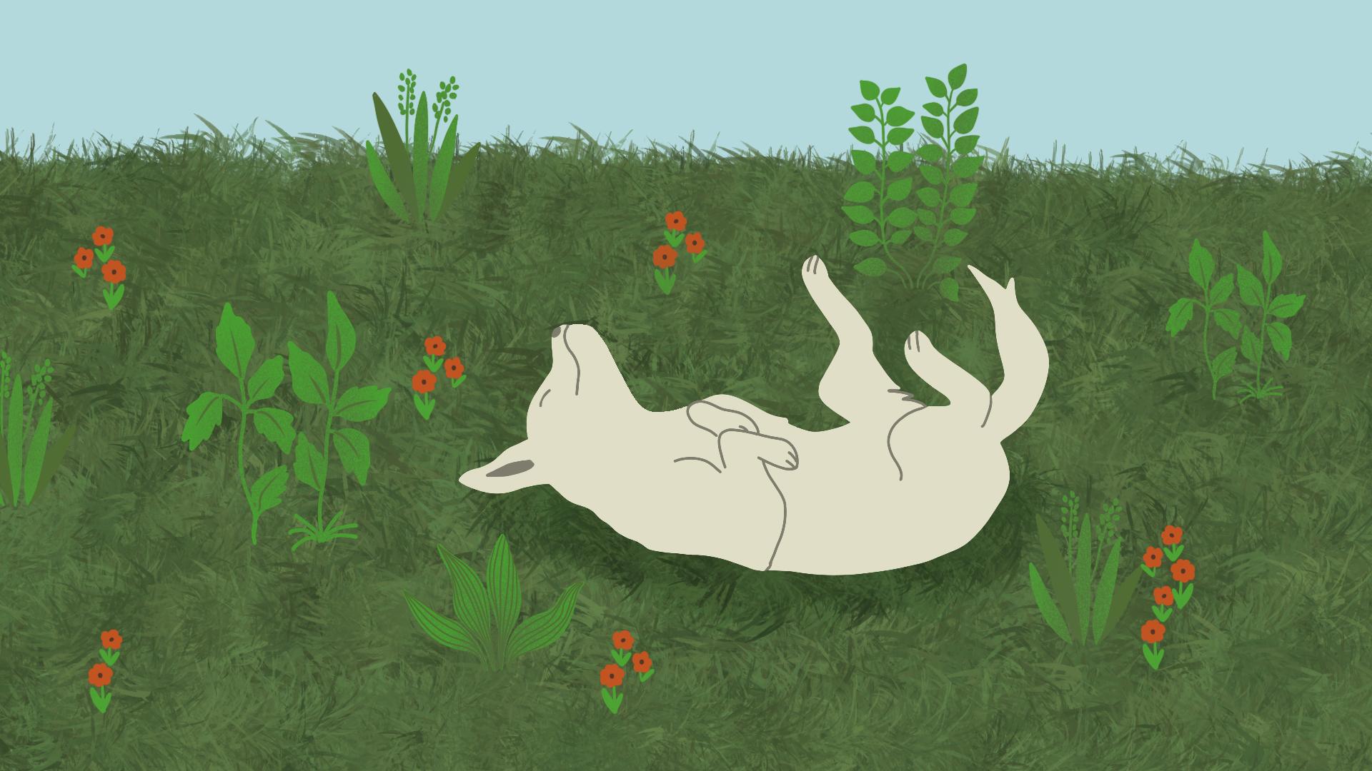 Waarom rollen honden in gras