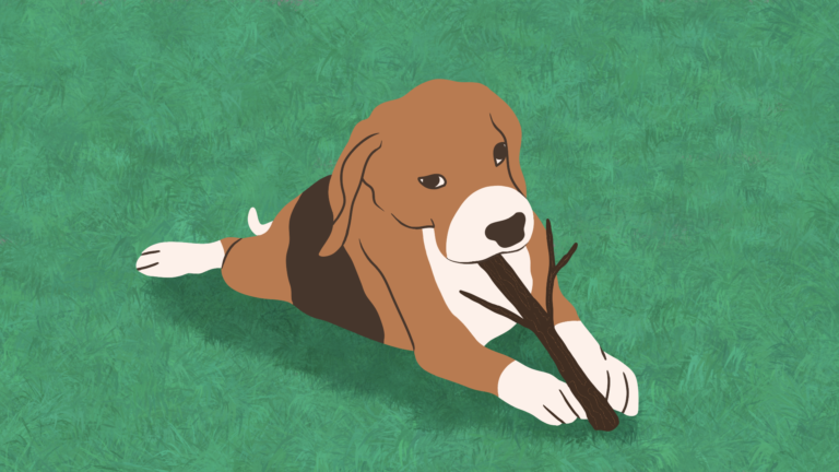 waarom eten honden takken